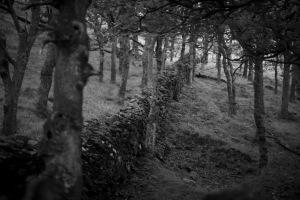 Liam woods 880